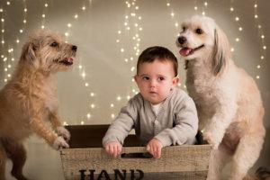 Dos gossos jugat amb el nen